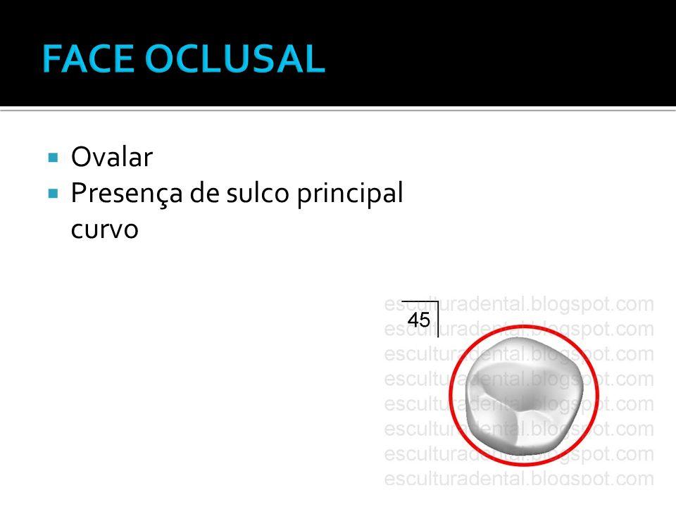 FACE OCLUSAL Ovalar Presença de sulco principal curvo