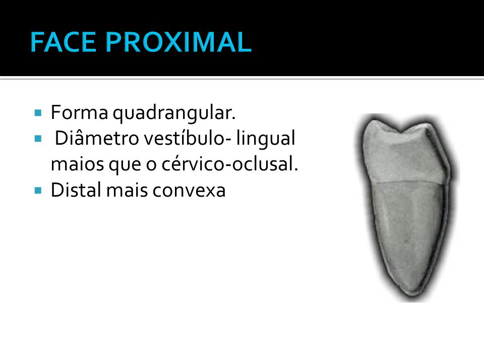 FACE PROXIMAL Forma quadrangular.