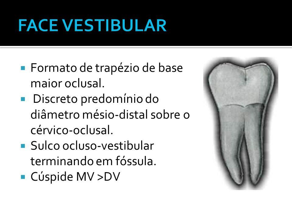 FACE VESTIBULAR Formato de trapézio de base maior oclusal.