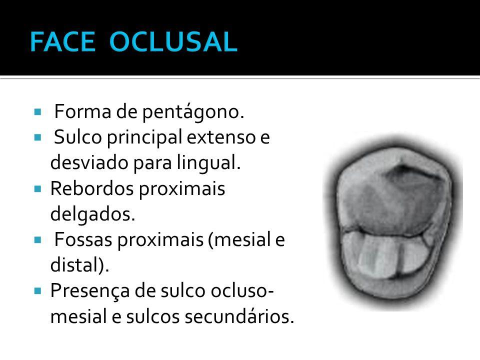 FACE OCLUSAL Forma de pentágono.