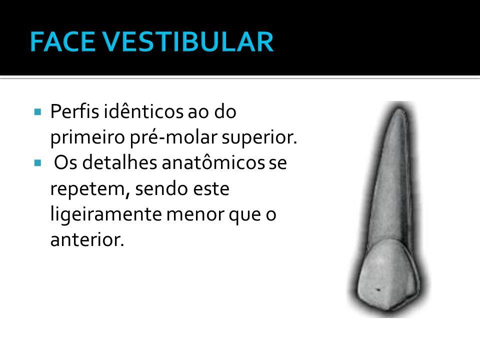 FACE VESTIBULAR Perfis idênticos ao do primeiro pré-molar superior.