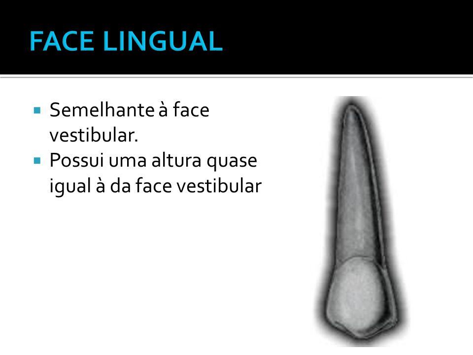 FACE LINGUAL Semelhante à face vestibular.