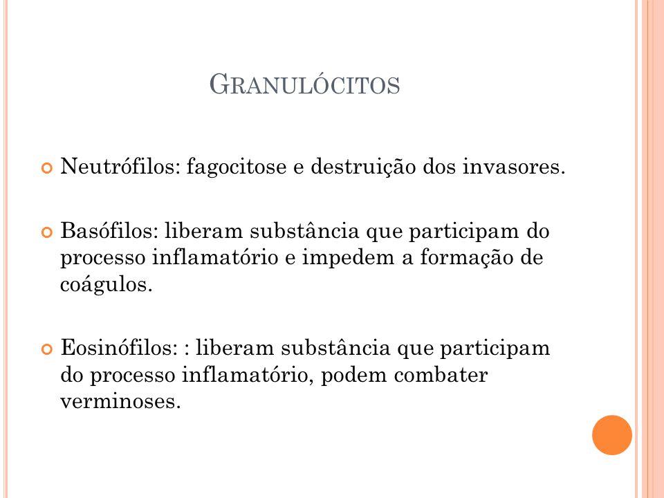 Granulócitos Neutrófilos: fagocitose e destruição dos invasores.