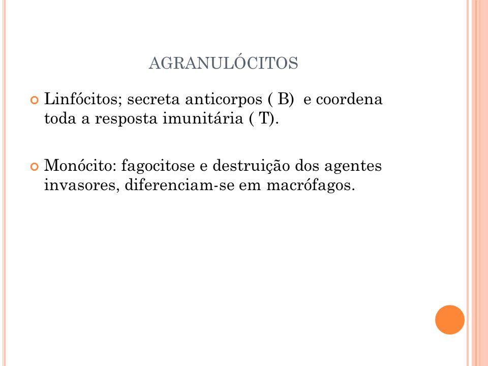 agranulócitos Linfócitos; secreta anticorpos ( B) e coordena toda a resposta imunitária ( T).