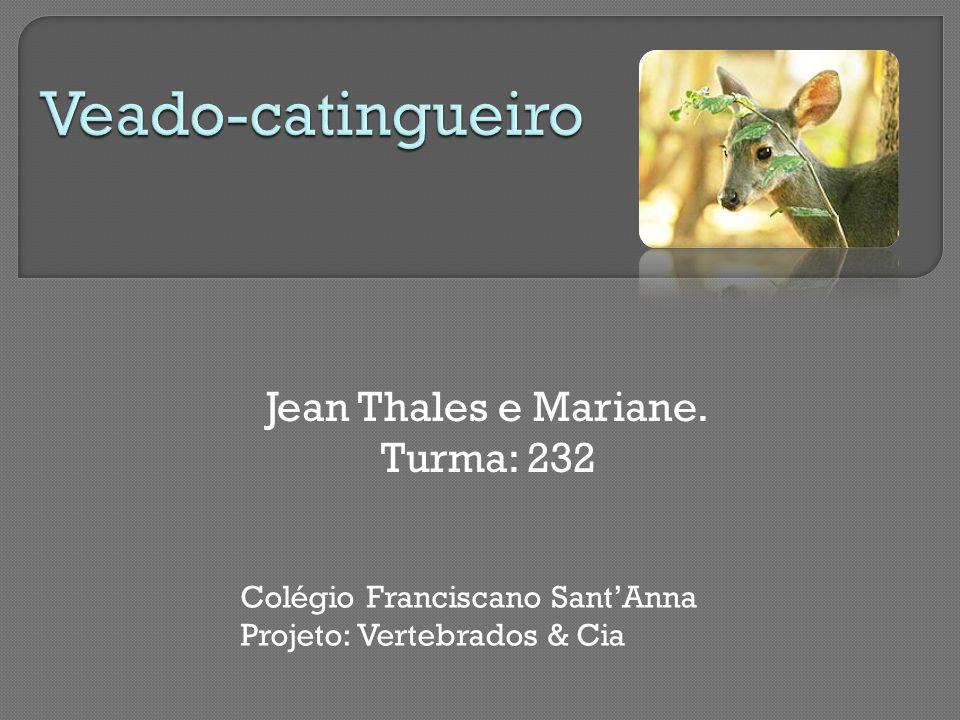 Jean Thales e Mariane. Turma: 232