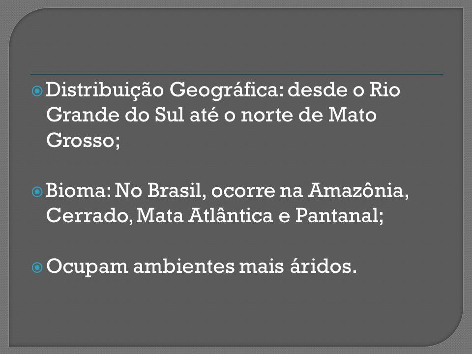 Distribuição Geográfica: desde o Rio Grande do Sul até o norte de Mato Grosso;