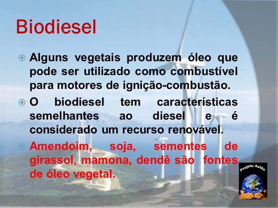 Biodiesel Alguns vegetais produzem óleo que pode ser utilizado como combustível para motores de ignição-combustão.