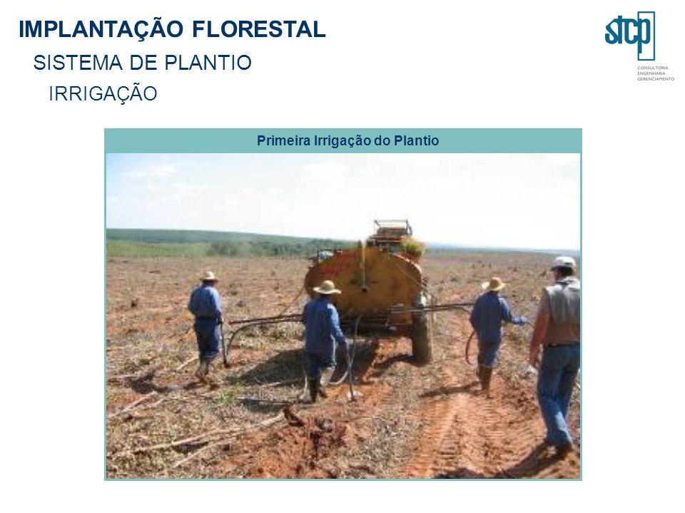 Primeira Irrigação do Plantio