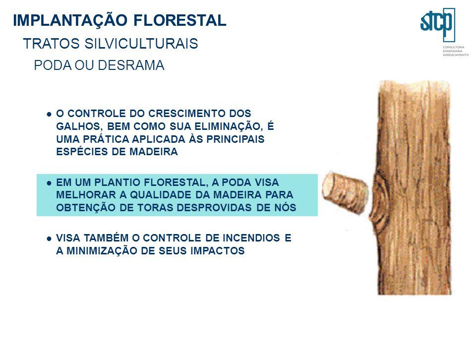 IMPLANTAÇÃO FLORESTAL TRATOS SILVICULTURAIS