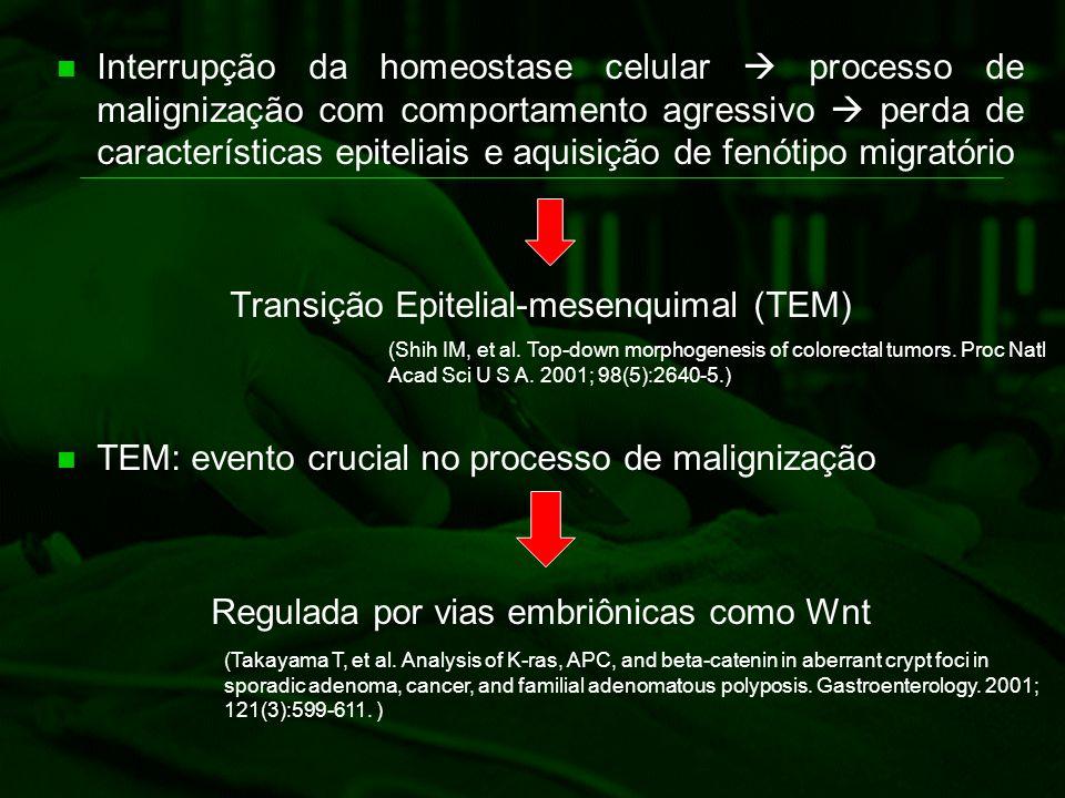 Transição Epitelial-mesenquimal (TEM)