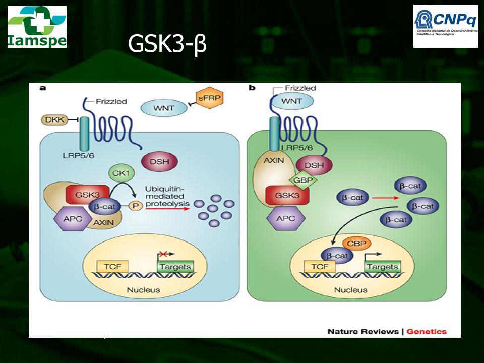 GSK3-β Teoria: