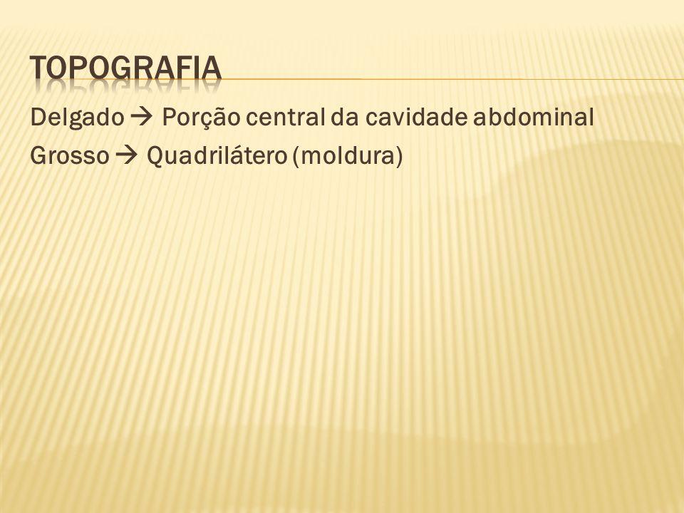 topografia Delgado  Porção central da cavidade abdominal Grosso  Quadrilátero (moldura)