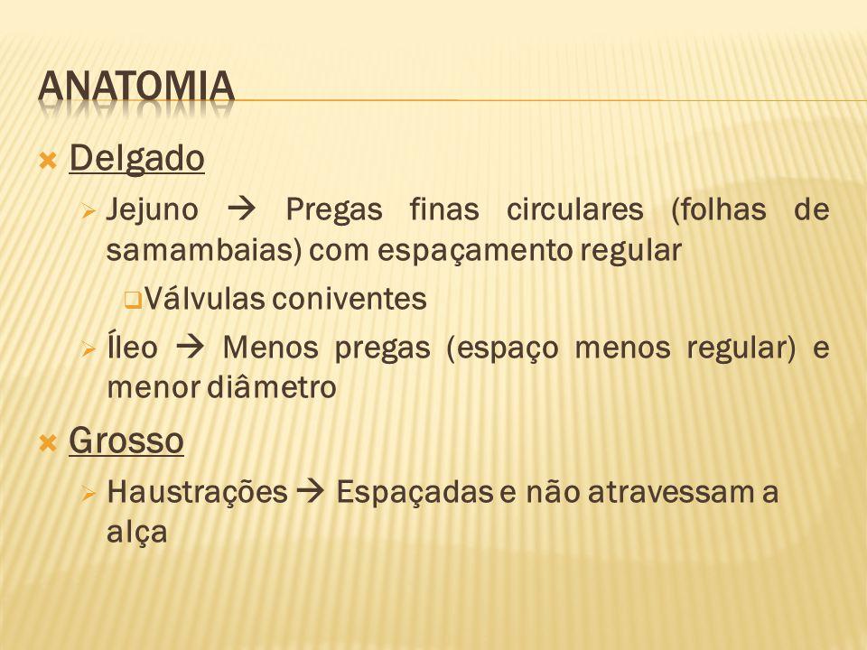 Anatomia Delgado Grosso