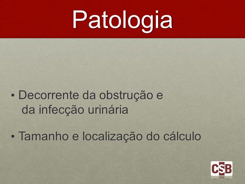 Patologia Decorrente da obstrução e da infecção urinária