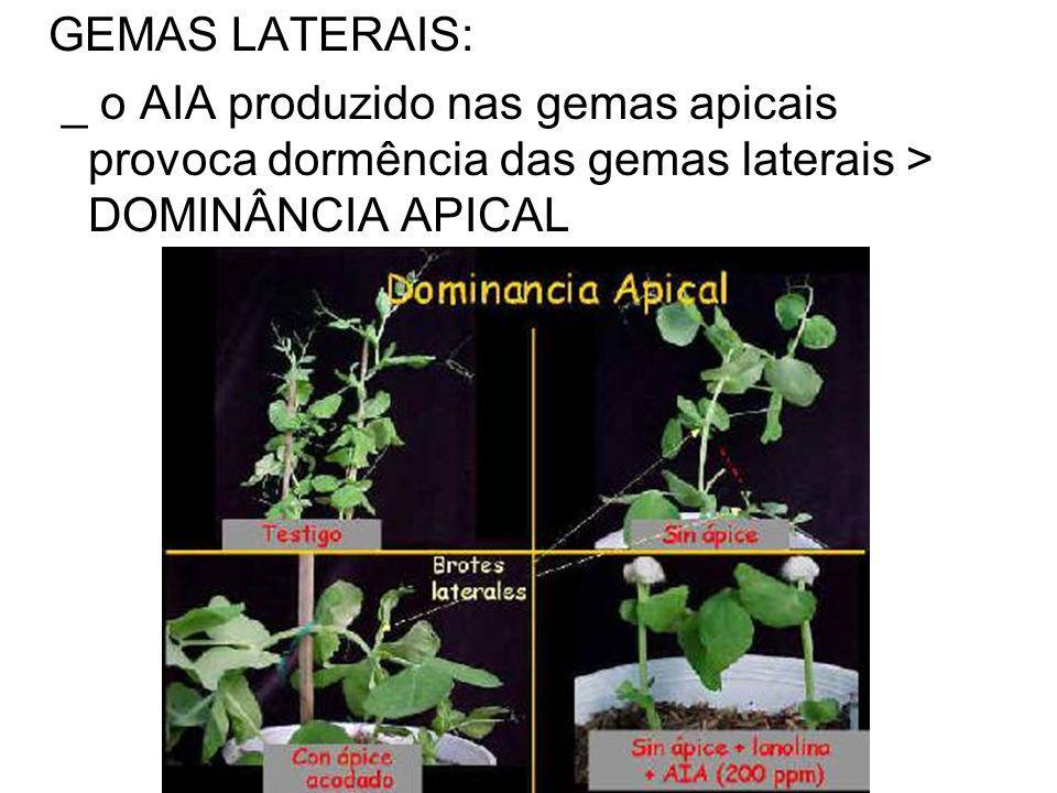 GEMAS LATERAIS: _ o AIA produzido nas gemas apicais provoca dormência das gemas laterais > DOMINÂNCIA APICAL.