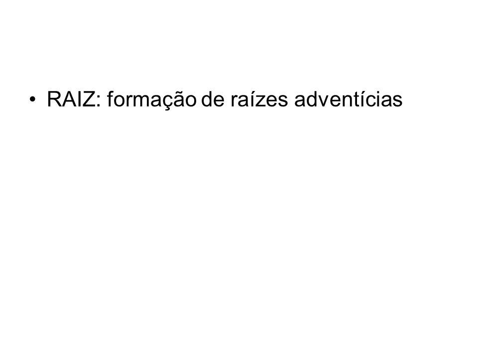 RAIZ: formação de raízes adventícias