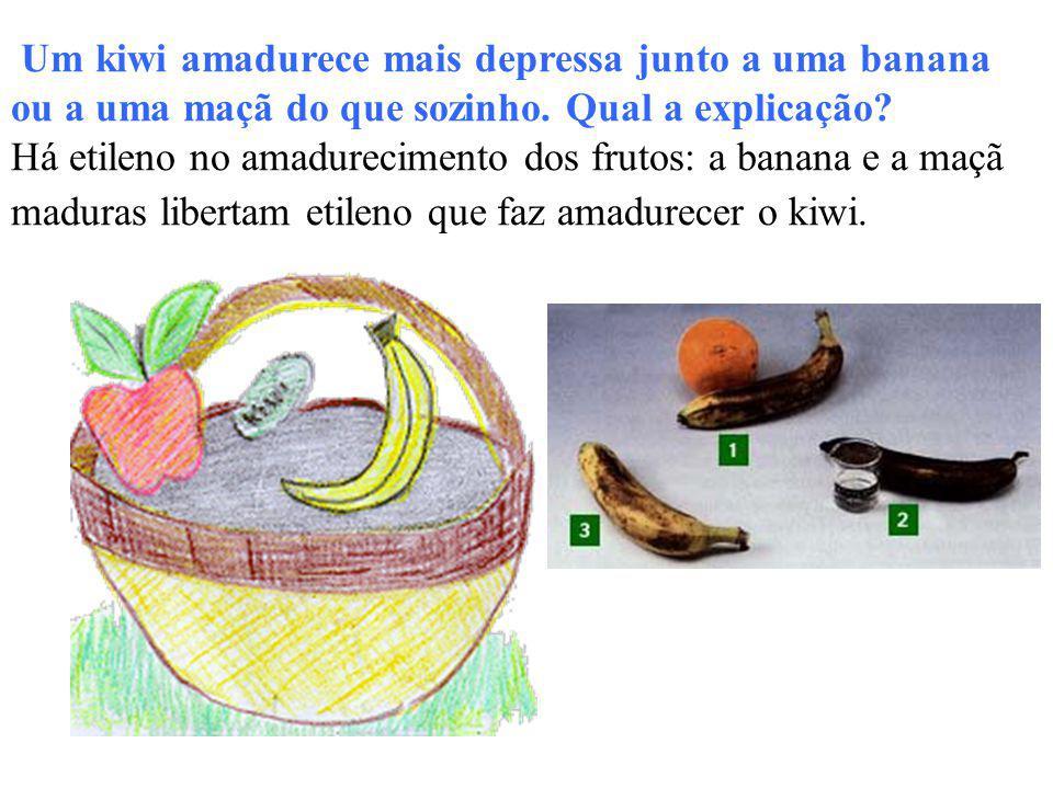 Um kiwi amadurece mais depressa junto a uma banana ou a uma maçã do que sozinho. Qual a explicação