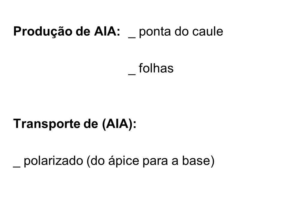 Produção de AIA: _ ponta do caule