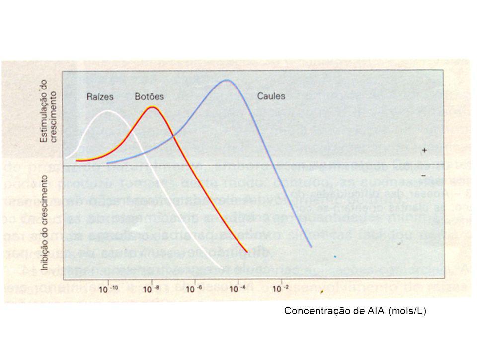Concentração de AIA (mols/L)