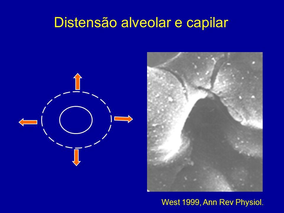 Distensão alveolar e capilar