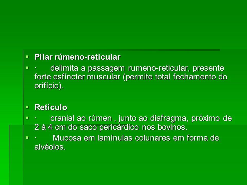 Pilar rúmeno-reticular