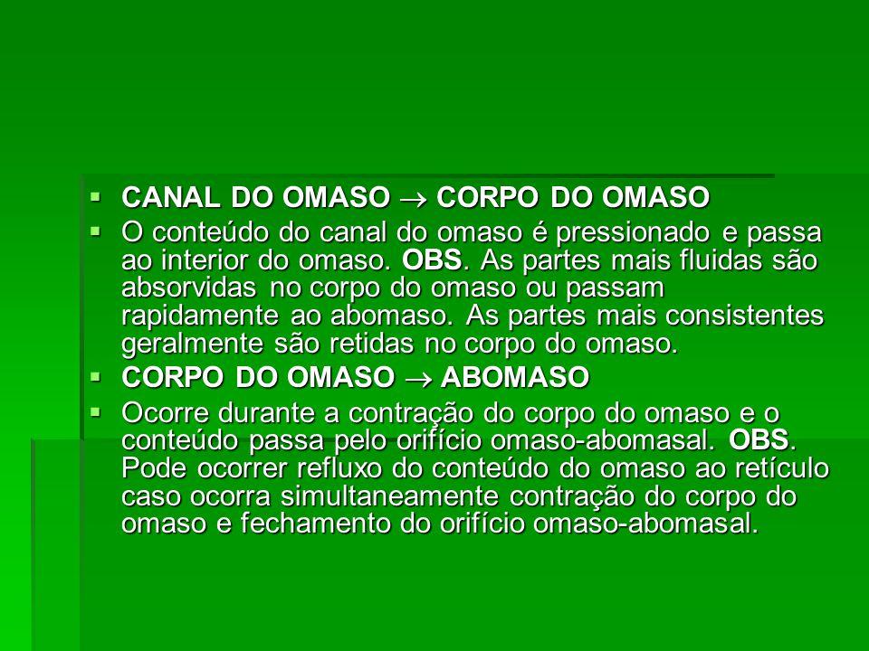 CANAL DO OMASO  CORPO DO OMASO