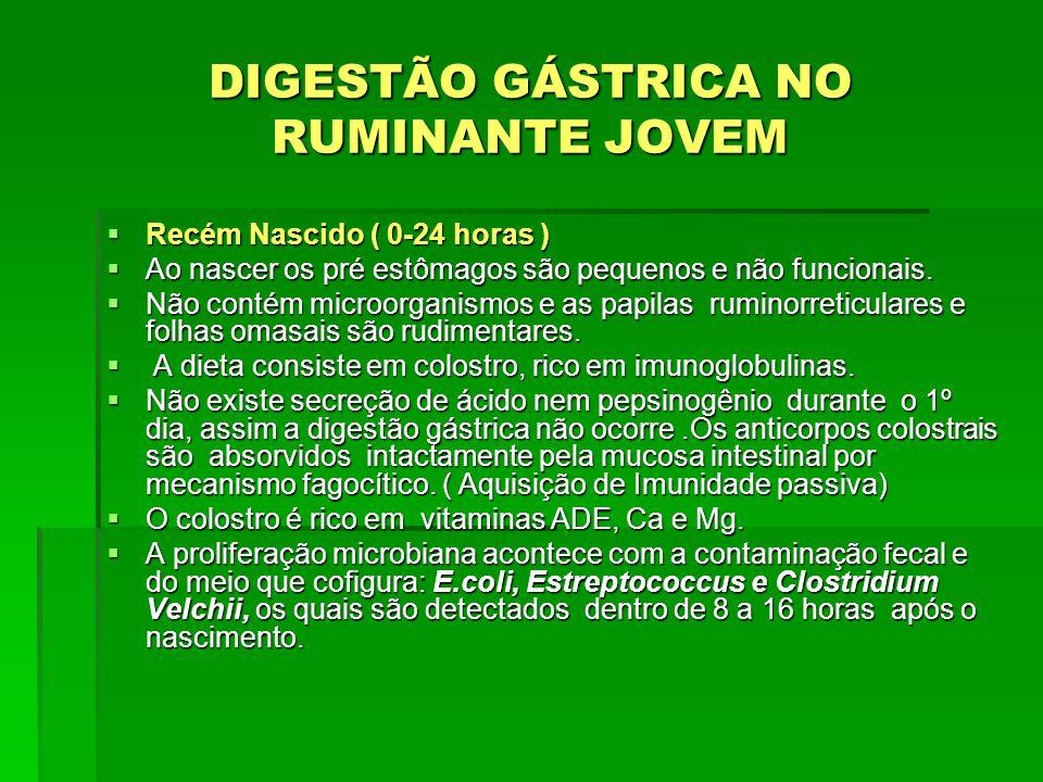DIGESTÃO GÁSTRICA NO RUMINANTE JOVEM