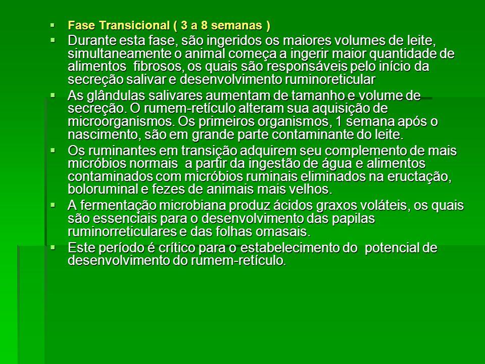 Fase Transicional ( 3 a 8 semanas )
