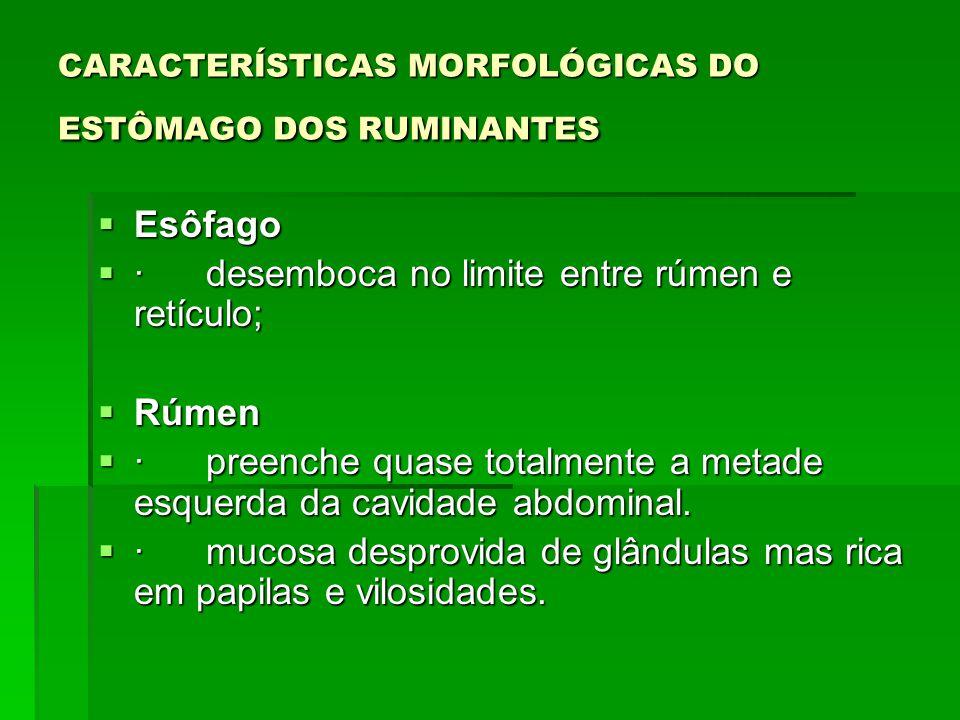 CARACTERÍSTICAS MORFOLÓGICAS DO ESTÔMAGO DOS RUMINANTES