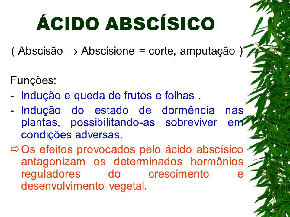 ( Abscisão  Abscisione = corte, amputação )