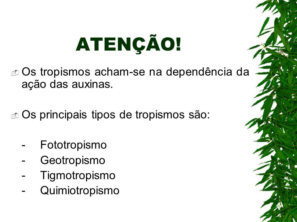 ATENÇÃO! Os tropismos acham-se na dependência da ação das auxinas.