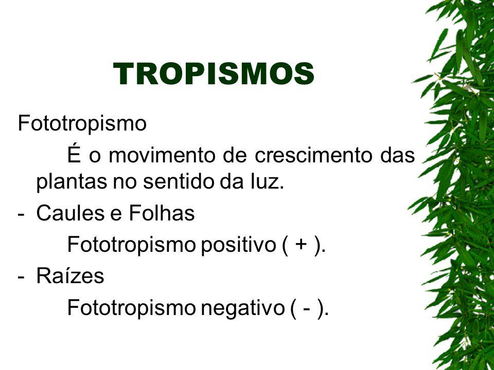 TROPISMOS Fototropismo
