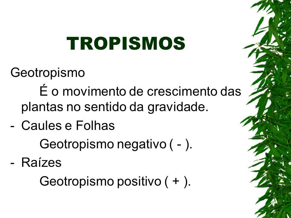 TROPISMOS Geotropismo