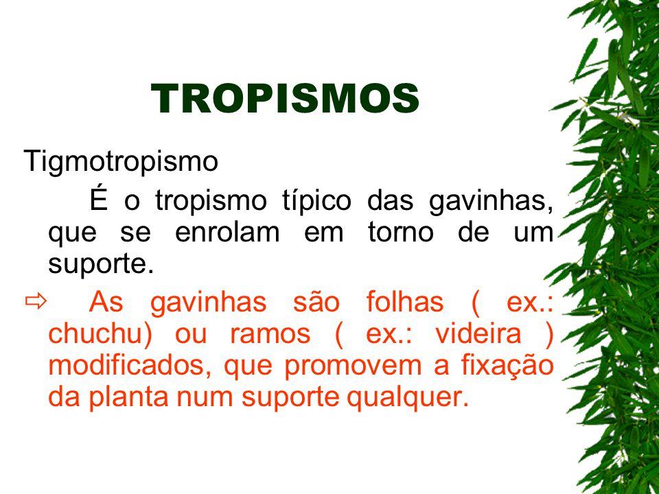 TROPISMOS Tigmotropismo