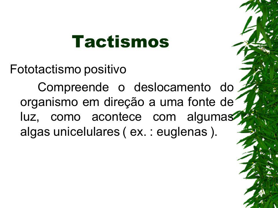 Tactismos Fototactismo positivo