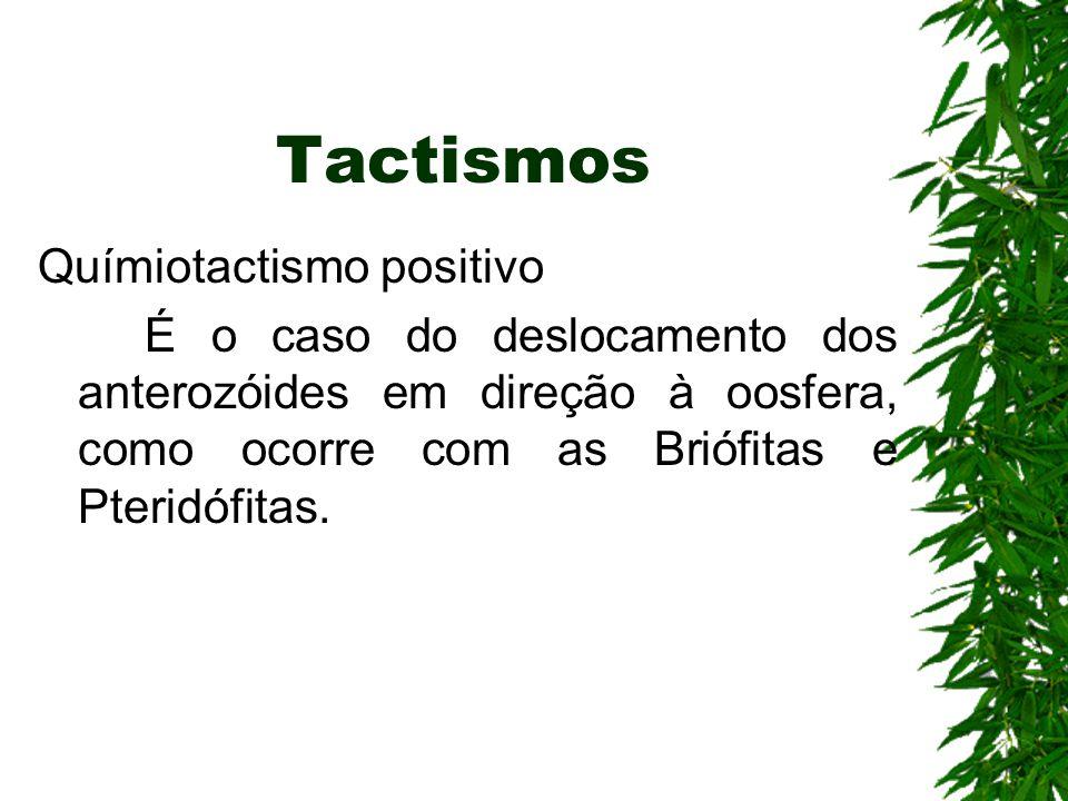 Tactismos Químiotactismo positivo