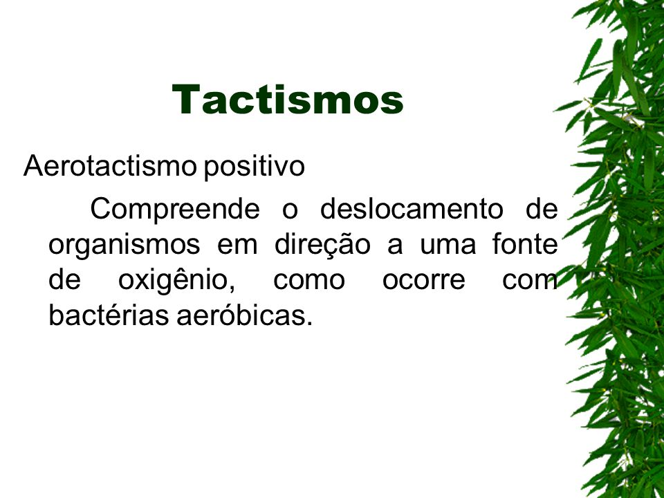Tactismos Aerotactismo positivo
