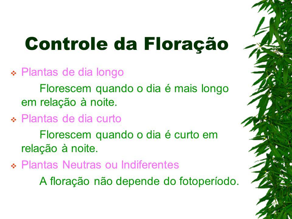Controle da Floração Plantas de dia longo