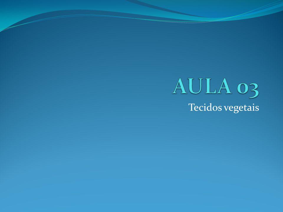 AULA 03 Tecidos vegetais