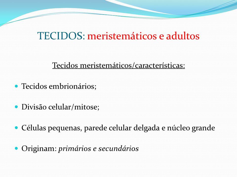 TECIDOS: meristemáticos e adultos