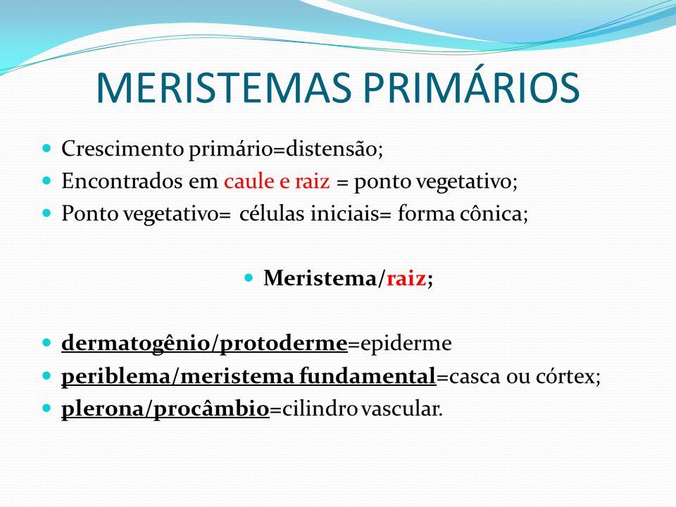 MERISTEMAS PRIMÁRIOS Crescimento primário=distensão;