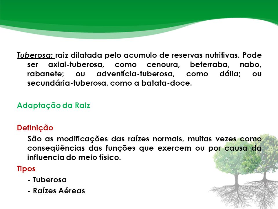 Tuberosa: raiz dilatada pelo acumulo de reservas nutritivas