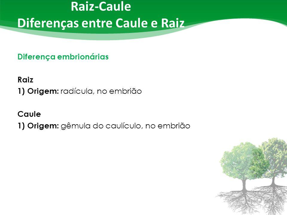 Raiz-Caule Diferenças entre Caule e Raiz