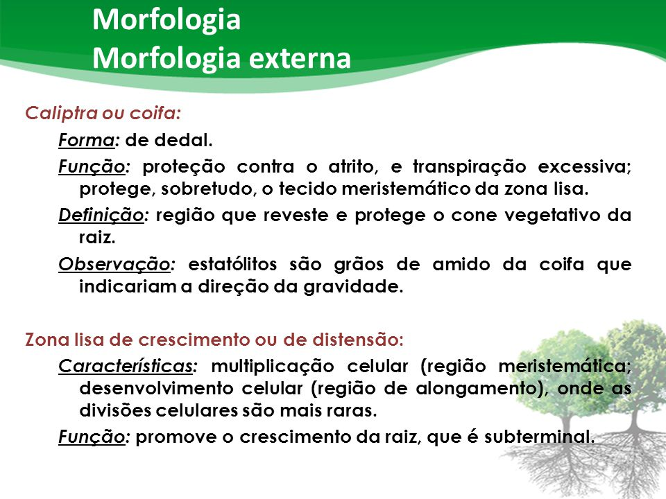 Morfologia Morfologia externa