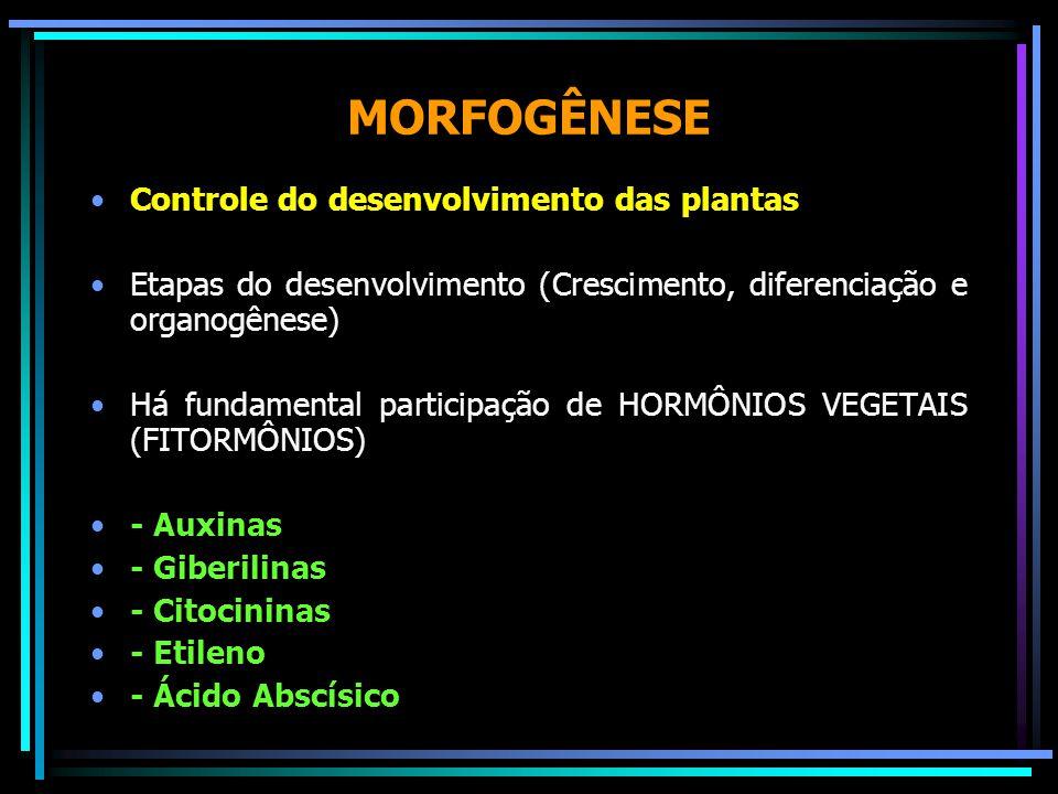 MORFOGÊNESE Controle do desenvolvimento das plantas