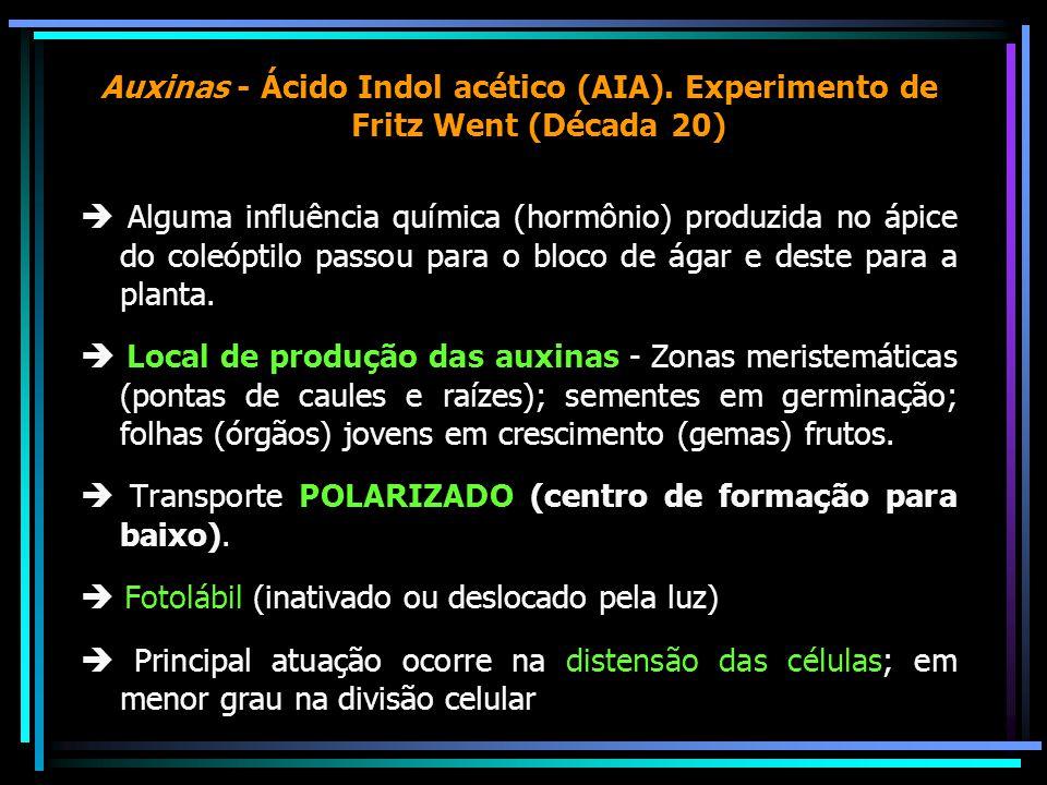 Auxinas - Ácido Indol acético (AIA)