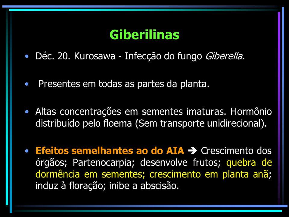 Giberilinas Déc. 20. Kurosawa - Infecção do fungo Giberella.