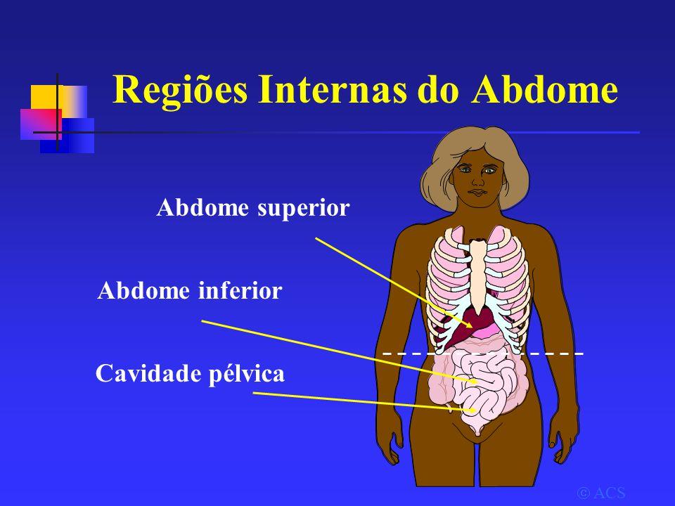 Regiões Internas do Abdome