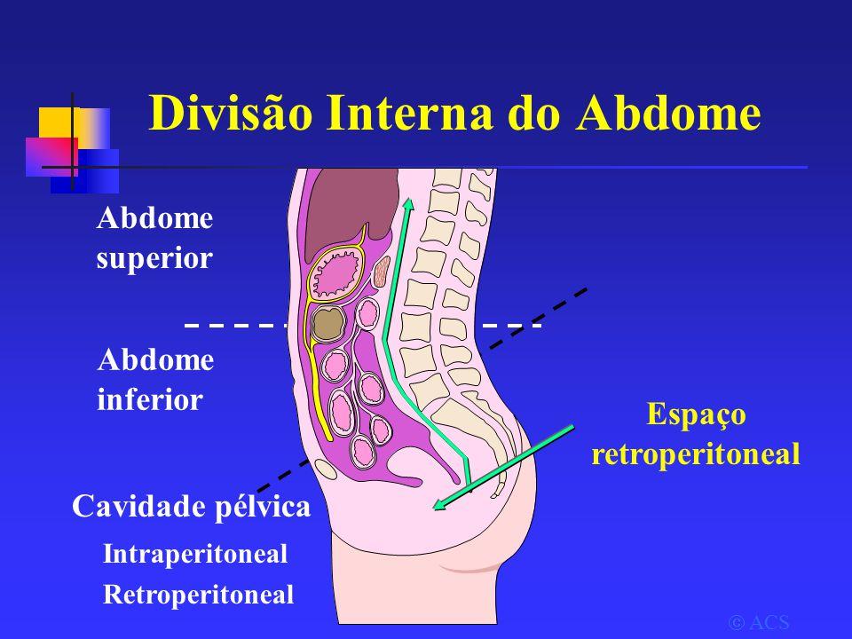 Divisão Interna do Abdome