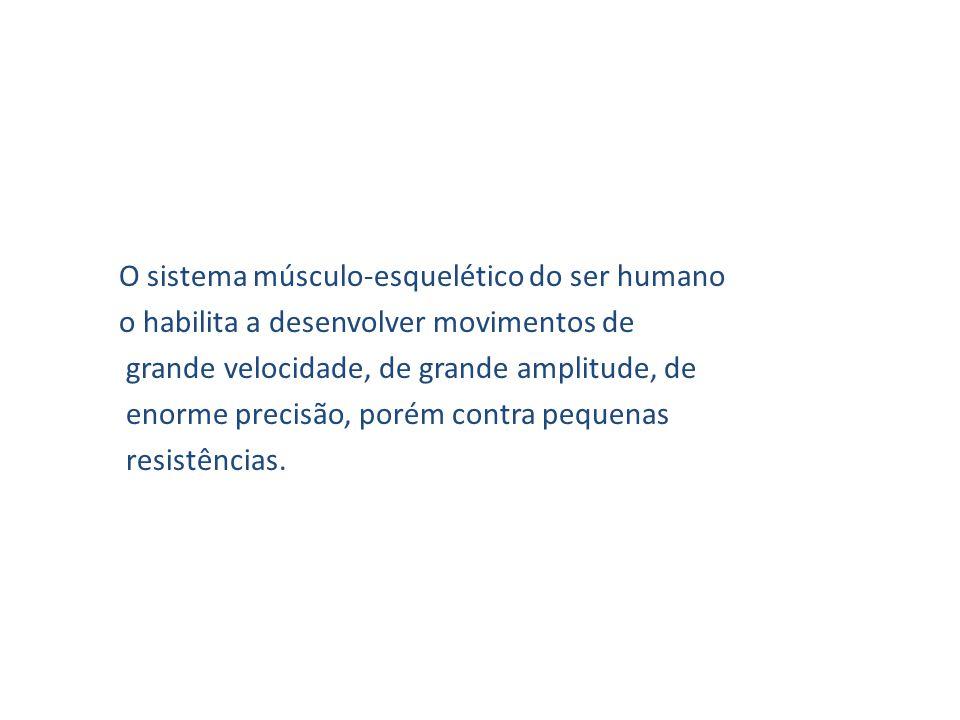 O sistema músculo-esquelético do ser humano